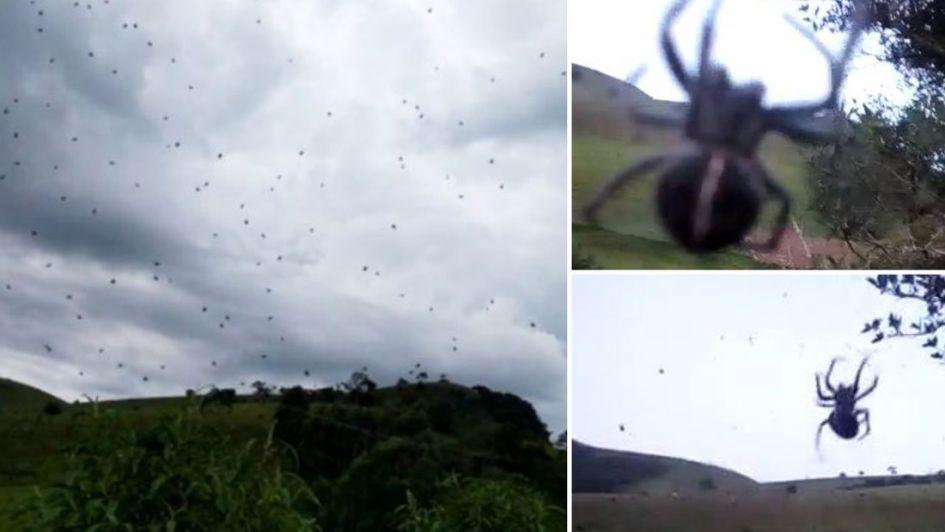 """Un adolescente logró filmar una aterradora """"lluvia de arañas"""" en Brasil"""