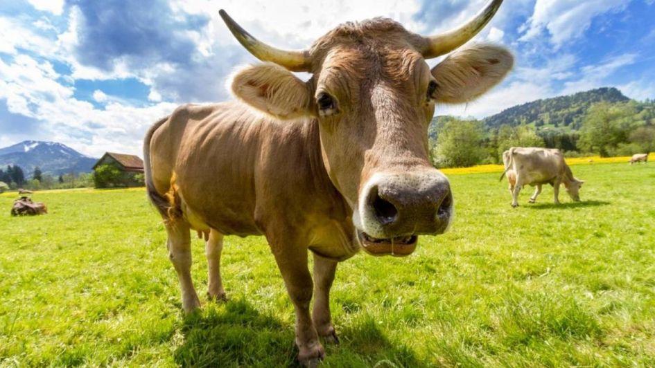 Las vacas flacas - Por Rosa Montero