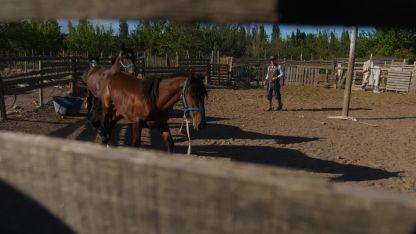 Discusión. Los animalistas quieren prohibir toda actividad con caballos.