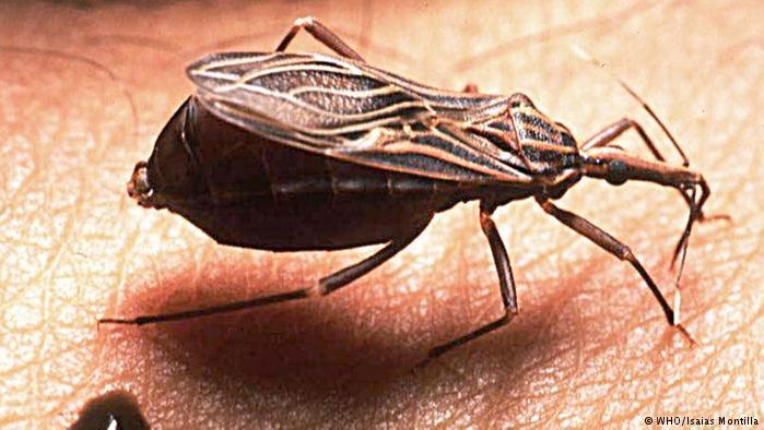 Nueva guía para el diagnóstico y tratamiento del Chagas