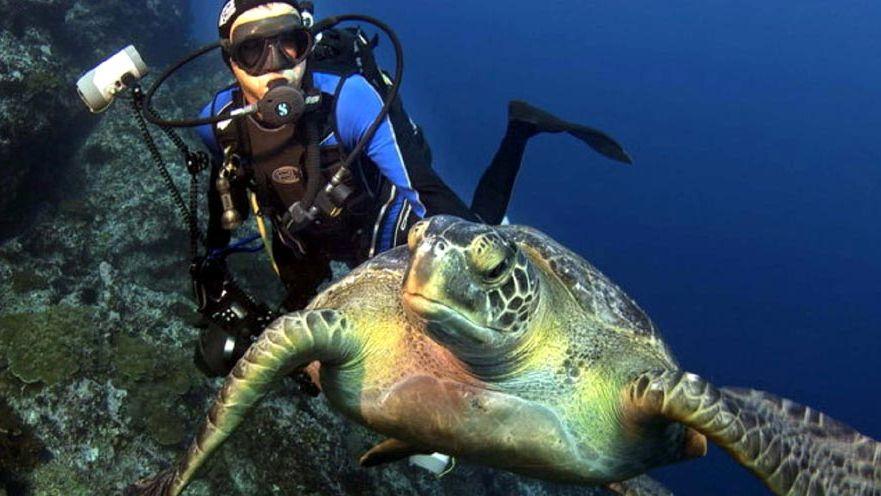 Mar profundo: los mejores lugares para bucear en Latinoamérica