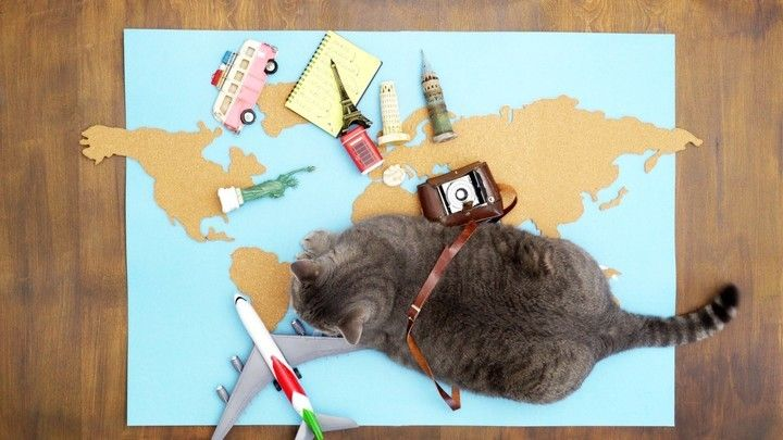 Mascotas: ranking de países pet friendly