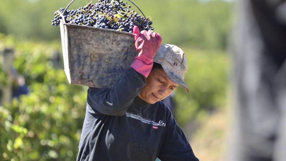 Le reclaman a Cornejo que asigne presupuesto para paliar la crisis vitivinícola
