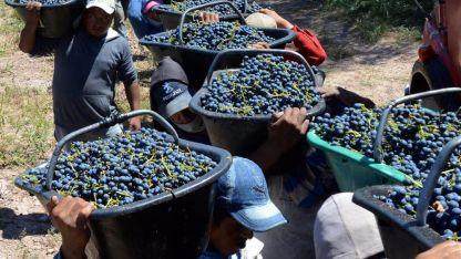 Aseguran que este año sobran 300 litros de vino.