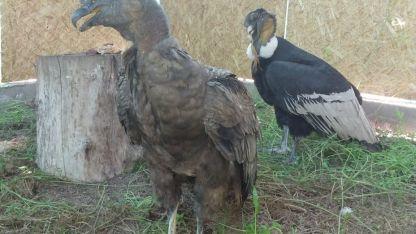 La fauna silvestre de la provincia de Mendoza está protegida por la Ley Nacional de Fauna 22.421