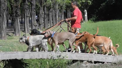 Experimentado. Julio Pinto se dedica a este oficio desde 1992 y traslada los canes en una camioneta.