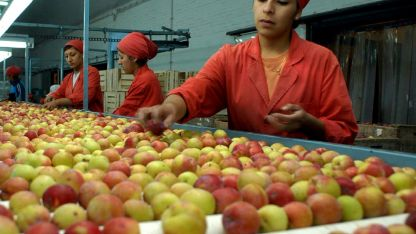 El año pasado fue particularmente bueno para este sector de la fruticultura.
