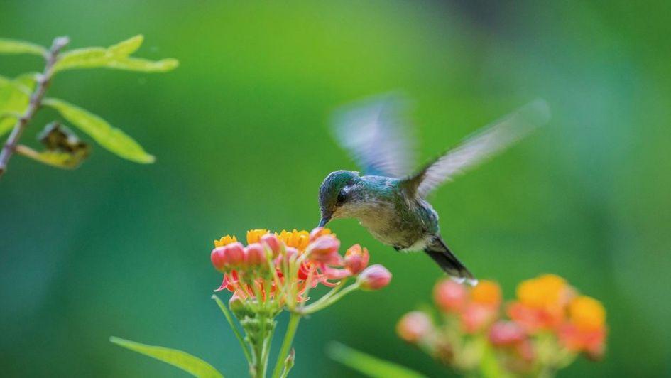 Un jardín creado para atraer colibríes
