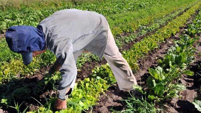 Producción agrícola: se debe usar cada vez más productos amigables - Por Pablo F. Loyola