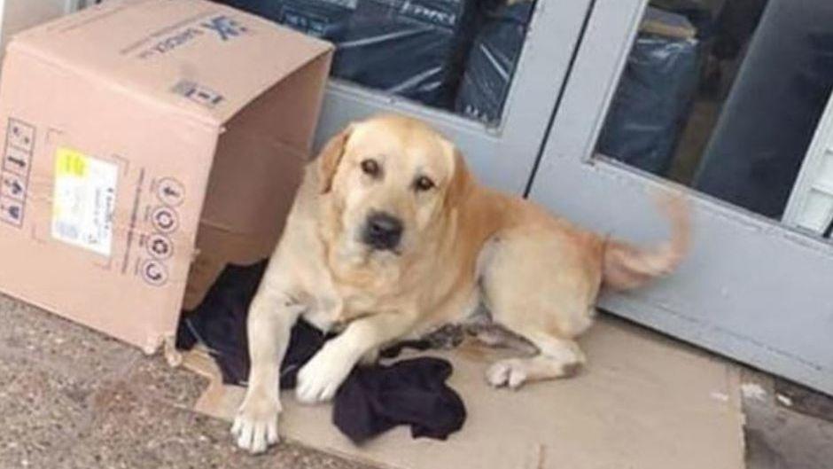 Murió hace una semana pero su perro lo sigue esperando en la puerta del hospital