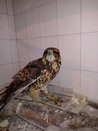 Denuncian que vecinos de un barrio privado disparan a las aves protegidas en El Challao