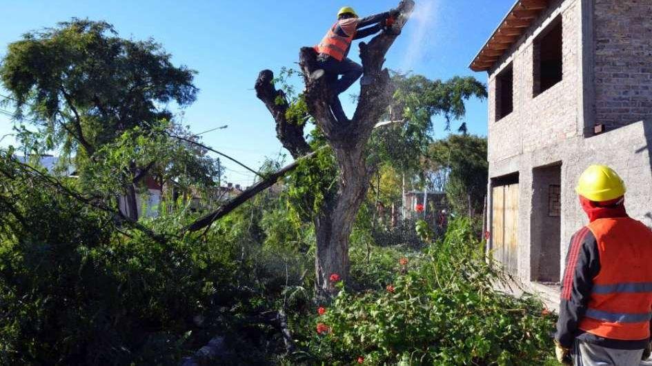 Urgente llamado por árboles en peligro