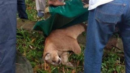 Fue capturado en el patio de una casa en la localidad correntina de Itatí