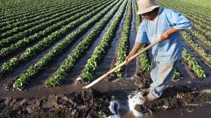 Laboriosos. Bolivianos horticultores, una especialización bien cotizada que impacta en la economía.
