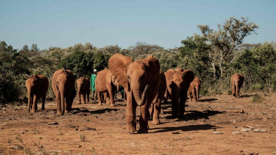Un cazador furtivo murió aplastado por un elefante y su cadáver fue devorado por leones