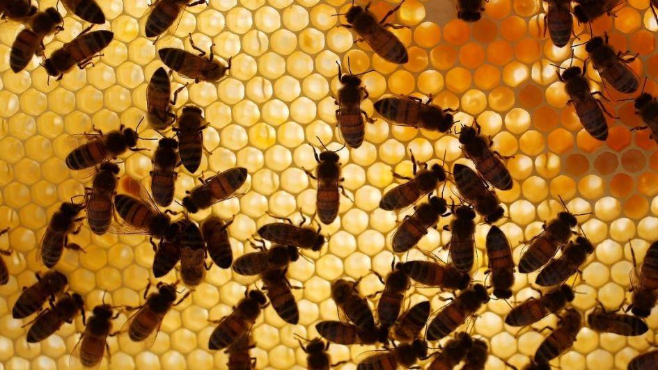 Consejo Nacional Apícola: La miel argentina se une para seguir creciendo