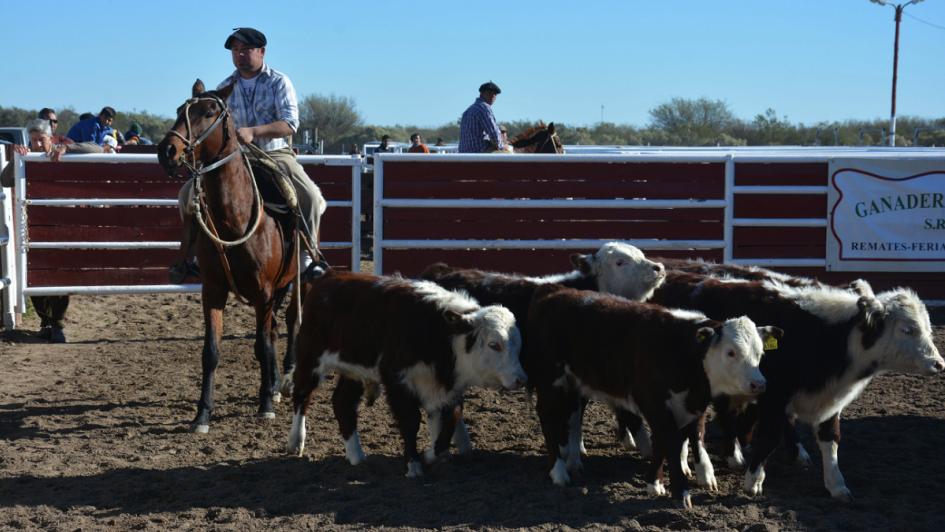 La Paz suma 50 mil cabezas de ganado, el 10% de la provincia