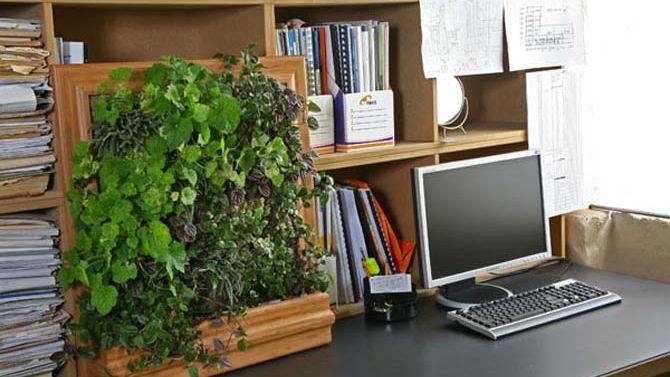 Llegó el taller de Jardines verticales, cubiertas y cuadros verdes