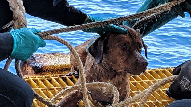 El emocionante rescate de un perro que fue visto nadando en alta mar, a 200 km de la costa