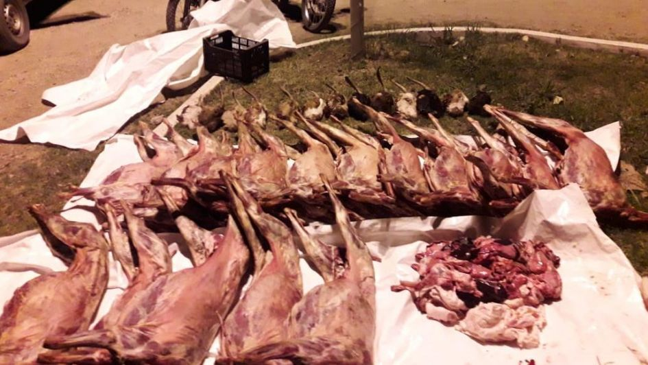 Detuvieron a un carnicero que llevaba 16 cabras faenadas en su camioneta en San Rafael
