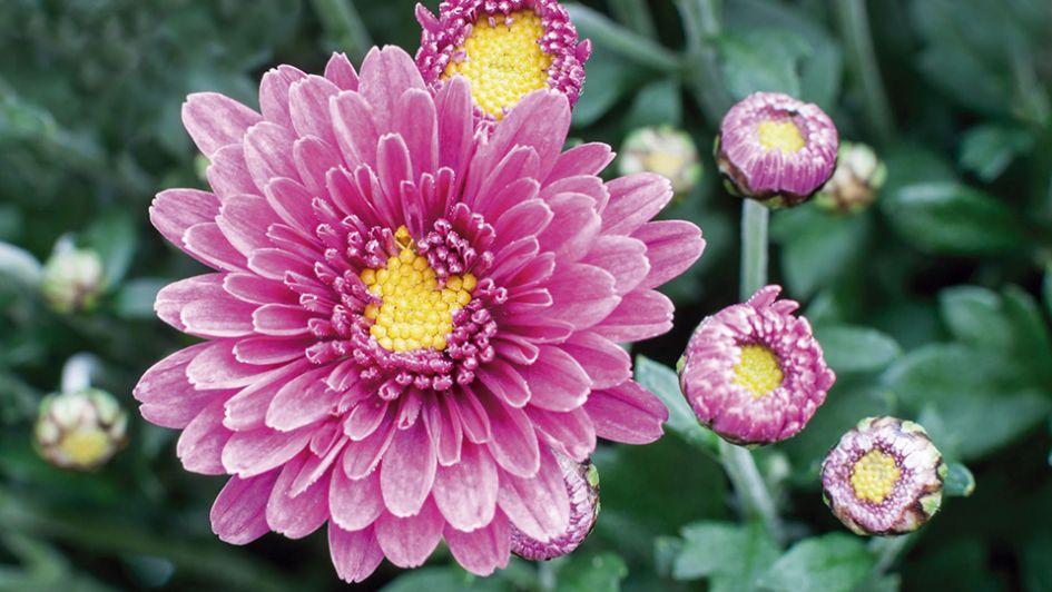 Flores para decorar tu jardín en otoño