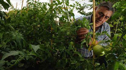 Sostienen que es necesario que los cultivos tengan algún tipo de protección.