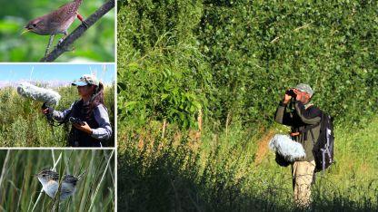 Grabación. Detalles de la captura del canto de dos aves, en el valle de Uspallata. Se trata de una ratona aperdizada y otra común.