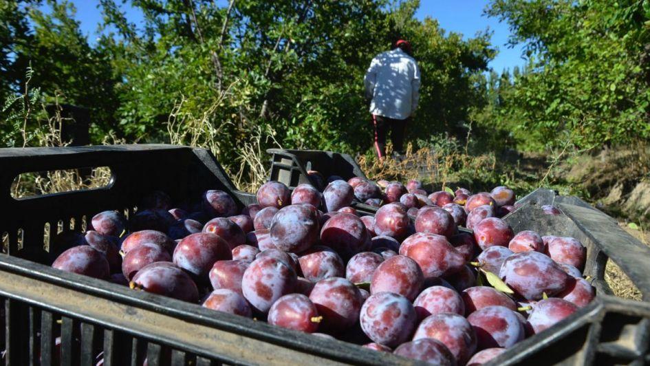 Dónde consultar mapas de heladas y de distribución de cultivos de frutales en Mendoza