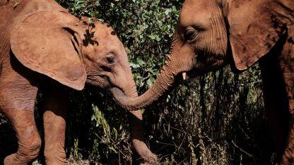 """""""Veremos matanzas masivas"""", dijo la directora general de WildlifeDirect"""