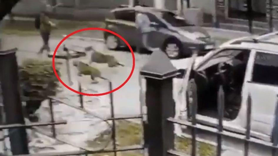 Sus perras lo salvaron de un robo a mano armada