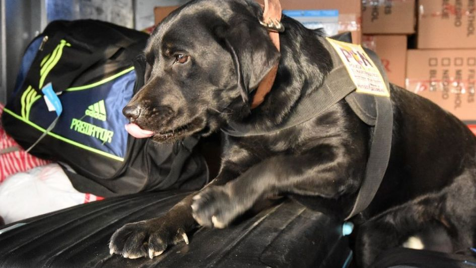 Olfato policial: así buscan drogas los perros en la terminal de ómnibus de Mendoza