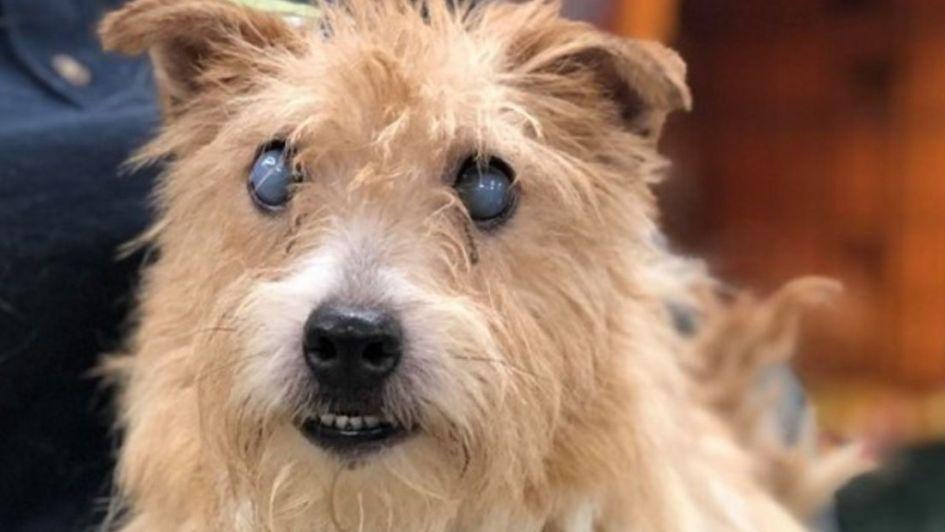 Rescataron más de 200 perros en condiciones lamentables de la