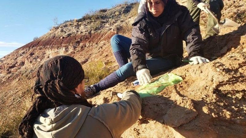 En la Universidad Nacional del Comahue descubrieron restos de un enorme dinosaurio