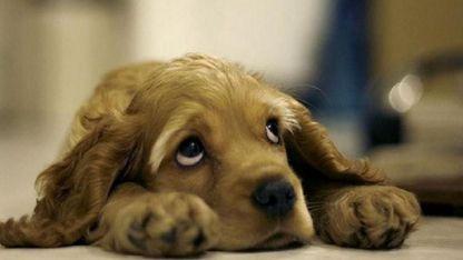 Los científicos filmaron interacciones de dos minutos entre perros y un humano al que desconocían